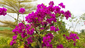 Purple paper flower. In the garden photography Royalty Free Stock Photos