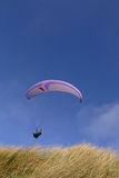 Purple paraglider. Passing over grass (vertical Stock Photos