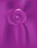 Purple Passion Rose Royalty Free Stock Images