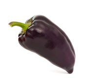 Purple pepper Stock Photography