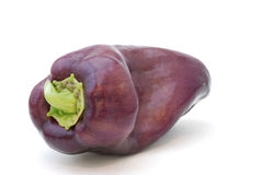Purple Pepper Royalty Free Stock Image