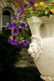 Purple perennial Royalty Free Stock Photos