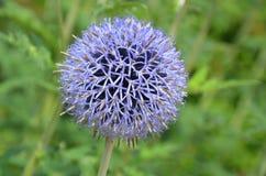Purple Petal Flower Stock Photo