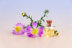 Purple Petal Flowers With Clear Glass Bottle With Cork in White Background Stock Photo