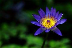 Purple Petaled Flower Stock Image