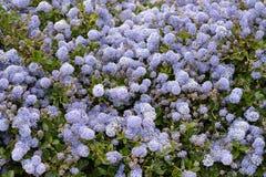 Purple Petaled Flower Stock Images