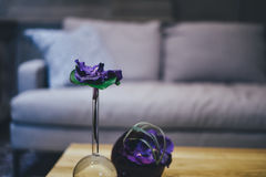 Purple Petaled Flower Near Grey Sofa Inside the Room Stock Photos