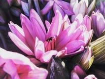 Purple Petaled Flowers Stock Photo