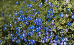 Purple Petaled Flowers Stock Photography