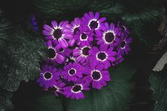Purple Petaled Flowers royalty free stock images