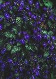 Purple Petaled Flowers Stock Image