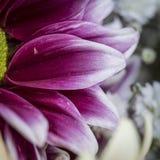 Purple petals macro still Stock Photography
