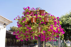 Purple petunia flowers for street decoration Stock Images
