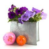 Purple Petunia plants Stock Images