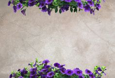 Purple petunias on warm neutral oil painting canvas. Background copy space texture royalty free stock photo