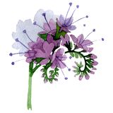 Purple phacelia floral botanical flower. Watercolor background illustration set. Isolated phacelia illustration element. Purple phacelia floral botanical flower royalty free stock photos
