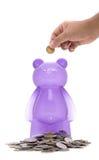 Purple piggy bear bank Stock Image