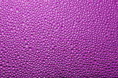 Purple pink background : water drops - Stock Photo Royalty Free Stock Image