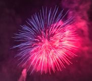 Twisted Color. Purple and pink fireworks exploding in the night sky Stock Image