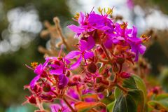 Purple and Pink flowers of the Mirador stock photo