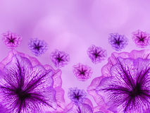 Purple-pink  flowers,  on pink- blurred background .  Closeup.  Bright floral composition Royalty Free Stock Photography