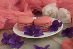 Purple, Pink, Lilac, Violet Royalty Free Stock Photos