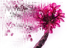 Purple Pink Plumeria illustration style oil painting - Stock Image Stock Photography