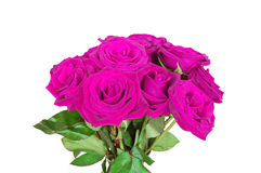 Purple/pink roses. Bouquet of purple/pink roses isolated on white royalty free stock photo