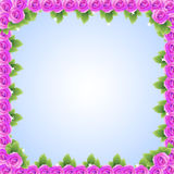 Purple pink roses frame Royalty Free Stock Photography
