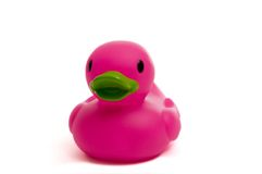 Purple, Pink Rubber Duck on white Stock Images