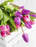 Purple and pink tulips in a wooden white box Royalty Free Stock Photography