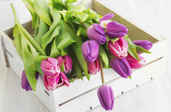 Purple and pink tulips in a wooden white box Stock Photo