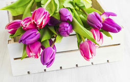 Purple and pink tulips in a wooden white box Stock Photography