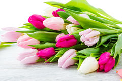 Purple, pink and white tulips bunch Royalty Free Stock Photography