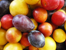 Purple, pink and yellow plums Stock Photography