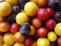 Purple, pink and yellow plums Royalty Free Stock Image