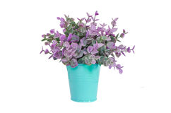 Purple plant in blue metal flower pot Royalty Free Stock Image