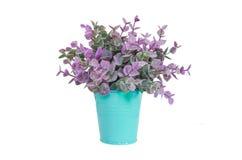 Purple plant in blue metal flower pot. Purple plant in blue color garden bucket tin box iron pot flower metal Royalty Free Stock Image