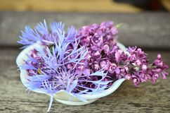 Purple, Plant, Flower, Violet Stock Photo
