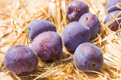Purple plum drops Stock Images
