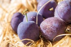 Purple plum drops Royalty Free Stock Photo