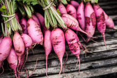 Purple Plum Radish. Vegetables in Mountain Royalty Free Stock Photos