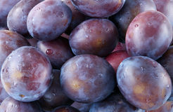 Purple plums Stock Photos