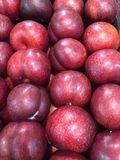 Purple Plums Royalty Free Stock Image