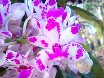 Purple pointed flowers. Orchids natural the gardening colorful Stock Images