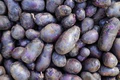 Purple potato stock photo