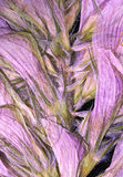 Purple pressed flower. Close up abstraction of petals on pressed dry purple flower stock photo