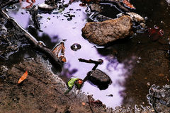 Purple puddle. Water in puddle reflecting purple sky Stock Images