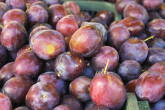 Purple pulms in a box. Plums in the market (plum background)- ready for sale at the Riga central market Stock Photos