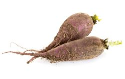 Purple radish in studio stock image